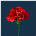 Цветы на 9 мая - Kvit-land
