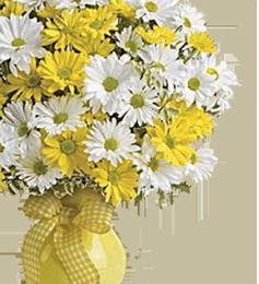 Хризантемы - Kvit-land