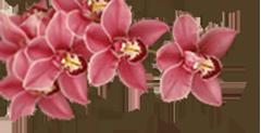 Орхидеи - Kvit-land