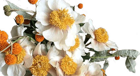Другие цветы - Kvit-land