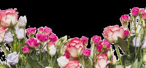 🌹 Розы