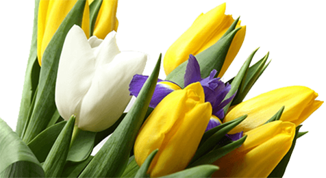 Тюльпаны - Kvit-land