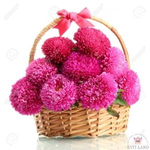 розовая астра в корзине