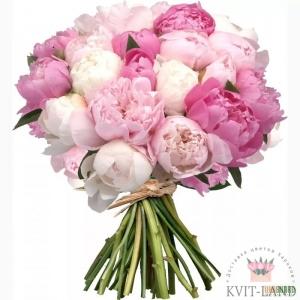 розовый пион букет