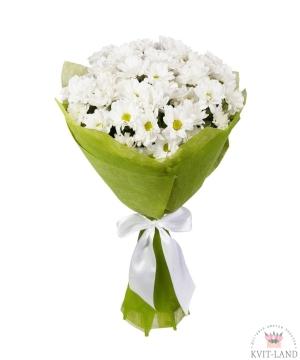 букет белой хризантемы ромашки