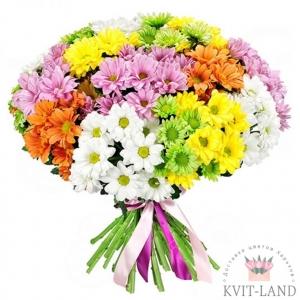 разноцветная хризантема большой букет