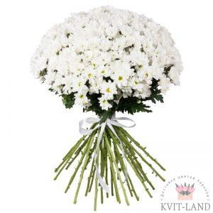белая хризантема букет
