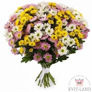 хризантема большой букет