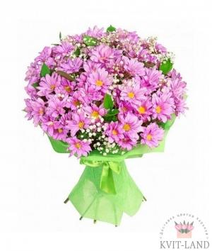 розовая хризантема в упаковке