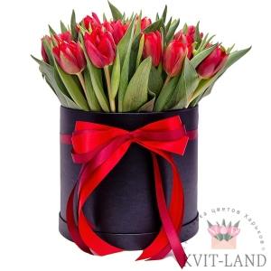 красный тюльпан в шляпной коробке