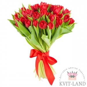 пионовидный красный тюльпан 25 шт.