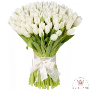 тюльпан белый 51 шт