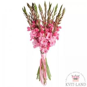 розовый гладиолус 15 шт.