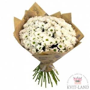 белая хризантема в букете