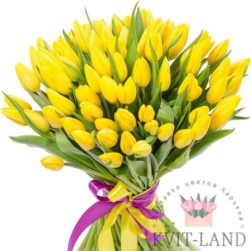 тюльпан желтый 51 шт