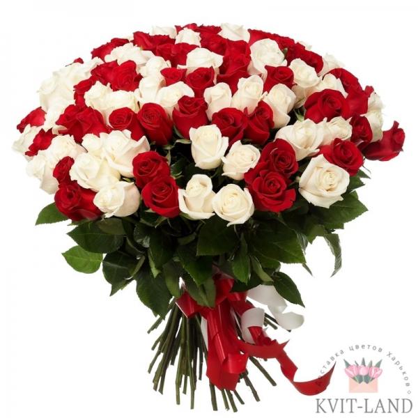 белая и красная роза 101 шт.