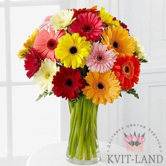разноцветная гербера в вазе