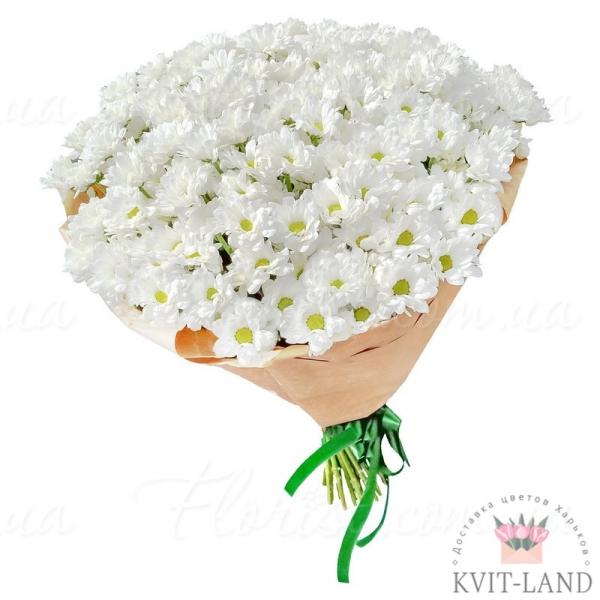 белая хризантема в упаковке