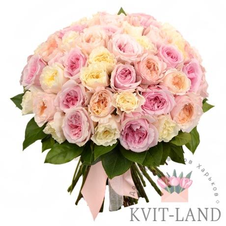 роза пионовидная 51 шт