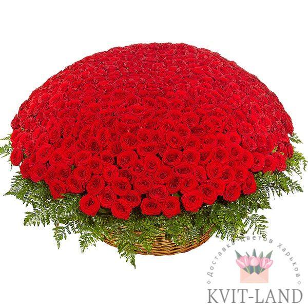 большая корзина красной розы