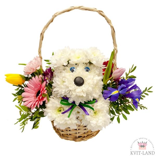в корзинке щенок из хризантемы