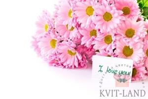 букет хризантем с открыткой