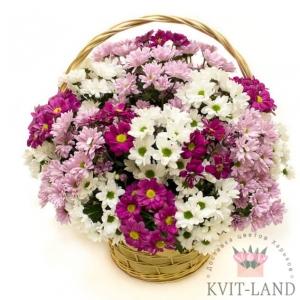 разная хризантема в корзине