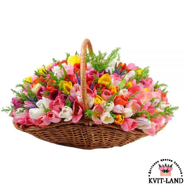 тюльпан в большой корзине