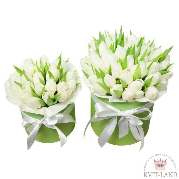 тюльпан в двух коробках