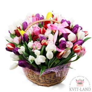 корзина тюльпана на 8 марта