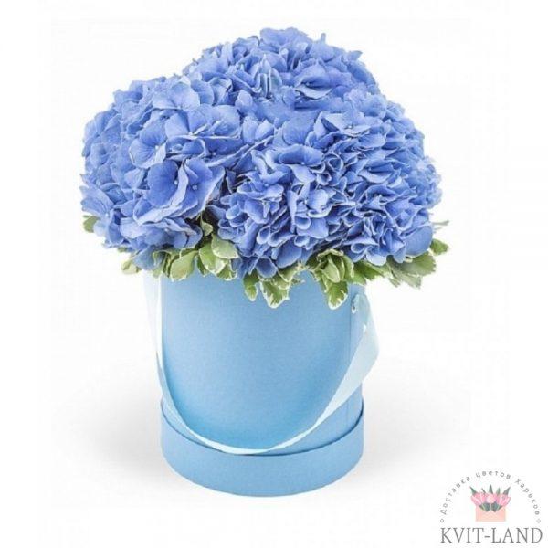 голубая гортензия в шляпной коробке