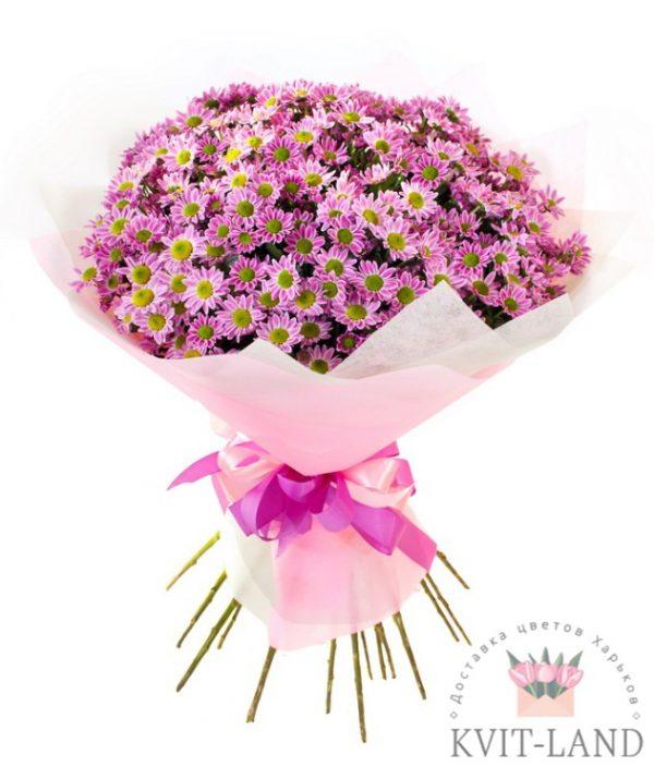 хризантема цветная букет