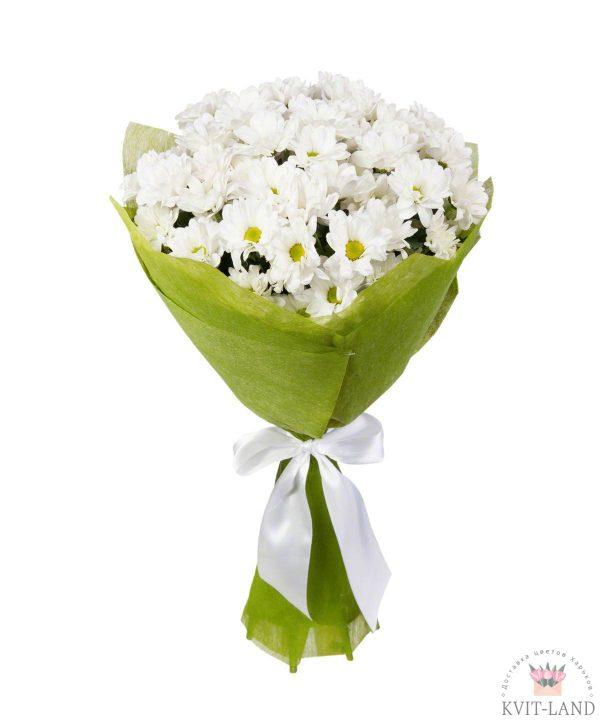 белая хризантема ромашка