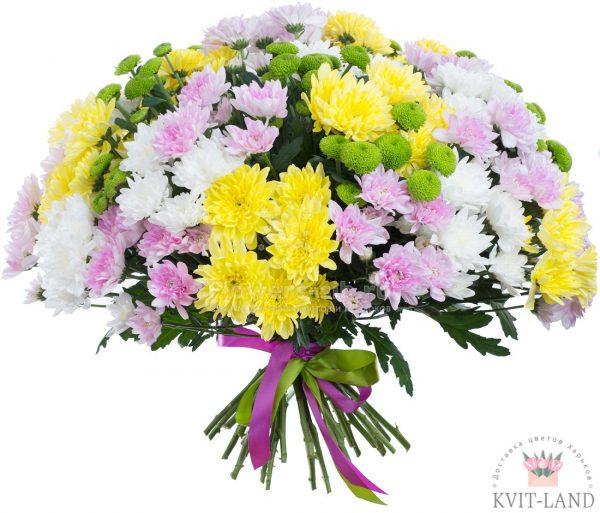 красивый букет хризантем