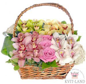 красивые орхидеи в корзине