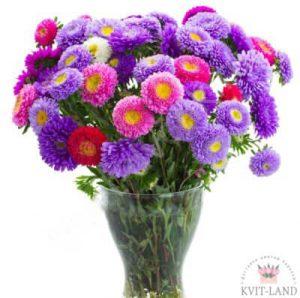 ваза с разноцветной астрой