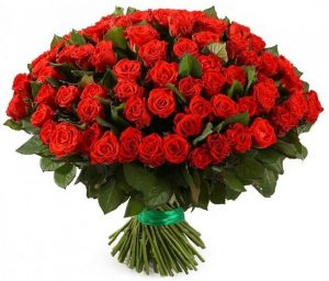 роза красная сто одна