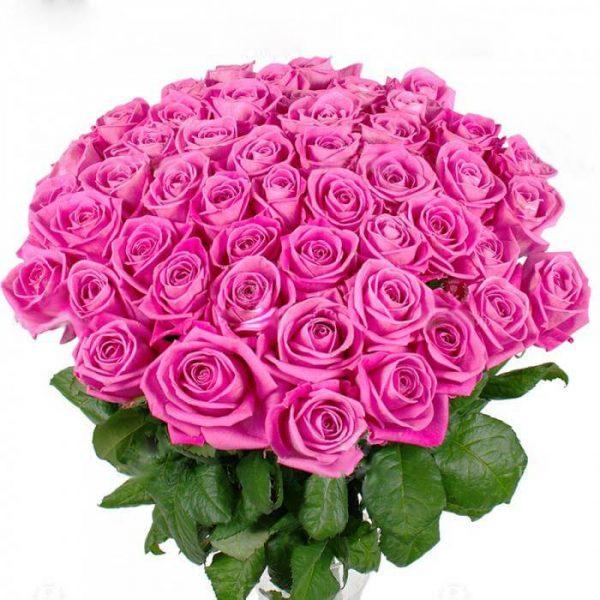 пятьдесять одна розовая роза