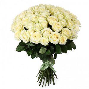 белая роза пятьдесят одна