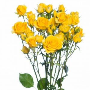кустовая роза желтого цвета