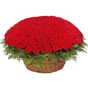 красная роза пятьсот одна
