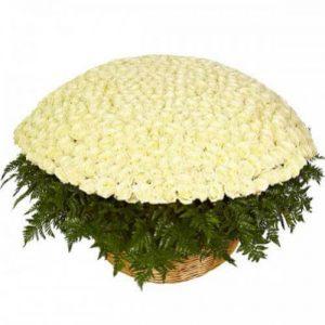белая роза пятьсот одна