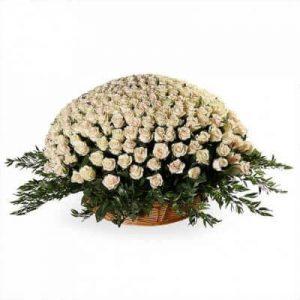 кремовая роза пятьсот одна