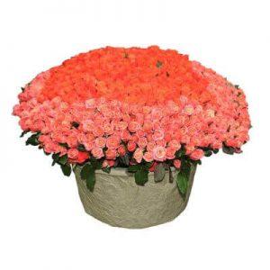 пятьсот одна коралловая роза