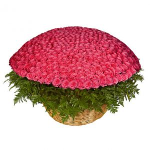 розовая роза пятьсот одна штука