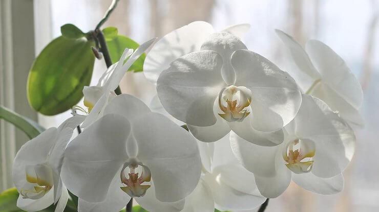 Где заказать орхидеи с доставкой