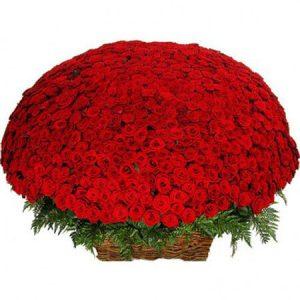🌹 1001 роза