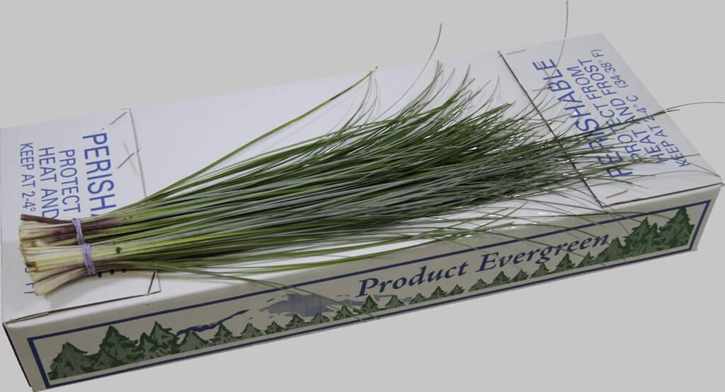 изображение цветочной экзотики берграс