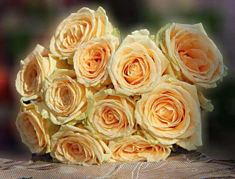 Кремовые розы Харьков