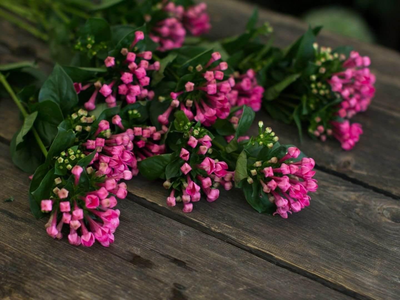 пучок розовых цветочков